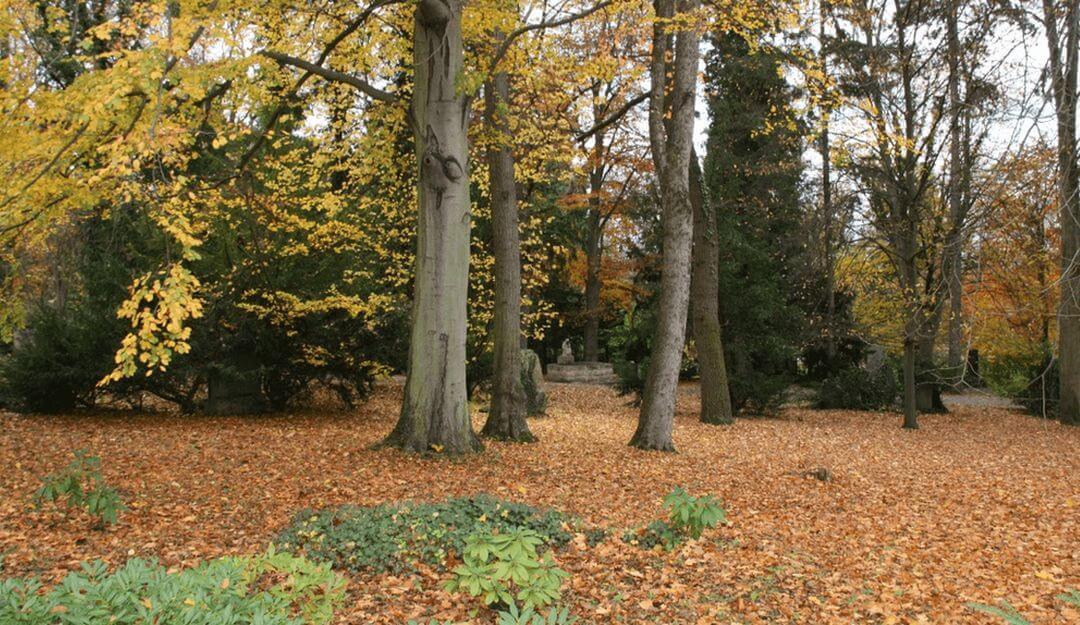 Geeigneter Ort für eine Baumbestattung | Bildquelle: © Stilvolle Grabsteine
