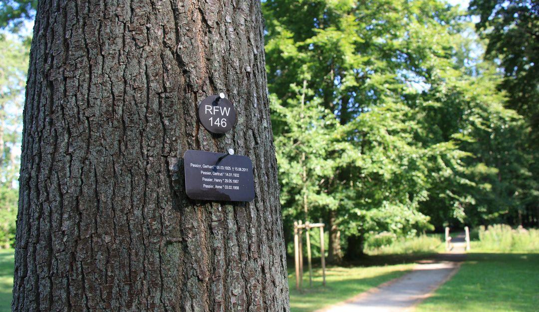 Statt eines Grabsteins werden kleine Tafeln mit den Daten an den Baum angebracht. | Bildquelle: © Stilvolle Grabsteine