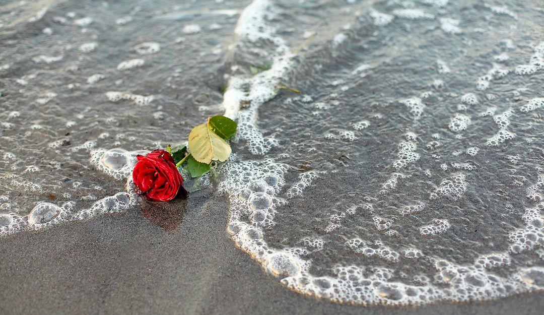 Rote Rose zum Abschied des Toten am Strand | Bildquelle: © twystydigi – Fotolia