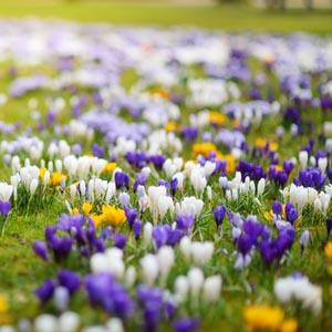Eine Grafik zu Grabblumen und Grabpflanzen im Frühling
