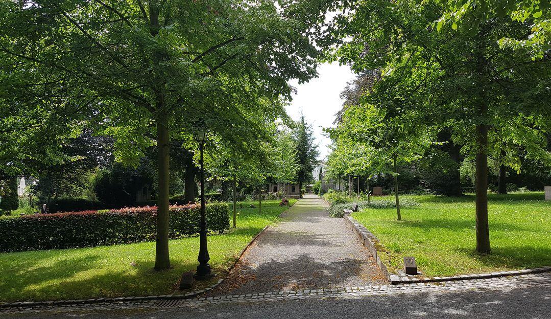 Friedhofsalle mir reichlich Bäumen für ein harmonisches Bild.| Bildquelle: © Stilvolle Grabsteine