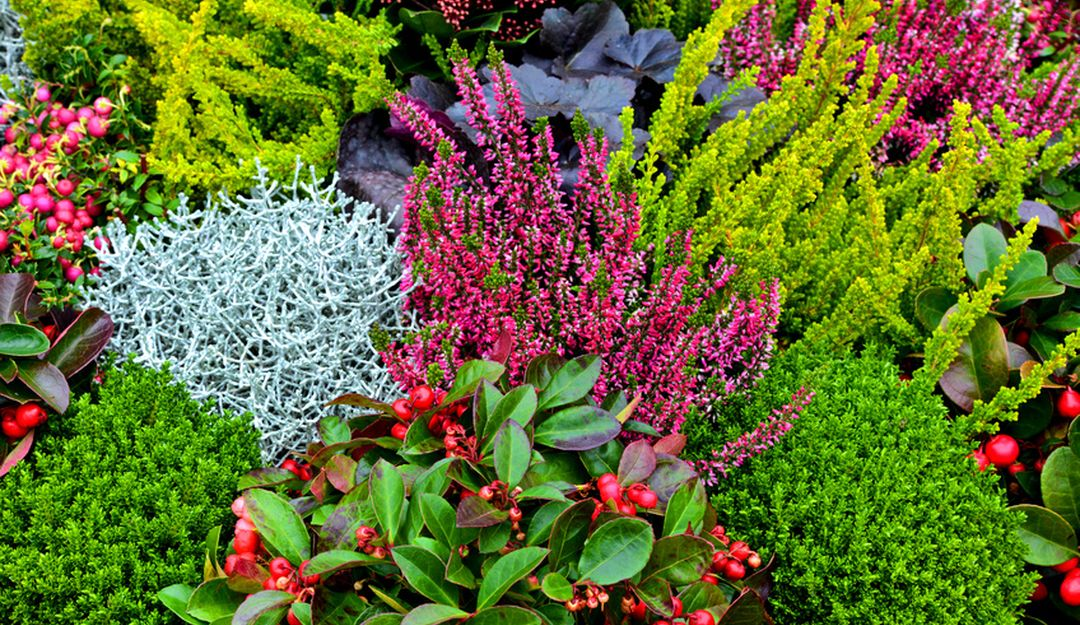 Im Herbst sollten Sie Pflanzen auswählen, die auch bei niedrigeren Temperaturen überdauern können und schön aussehen. | Bildquelle: © Stefan Körber - Fotolia