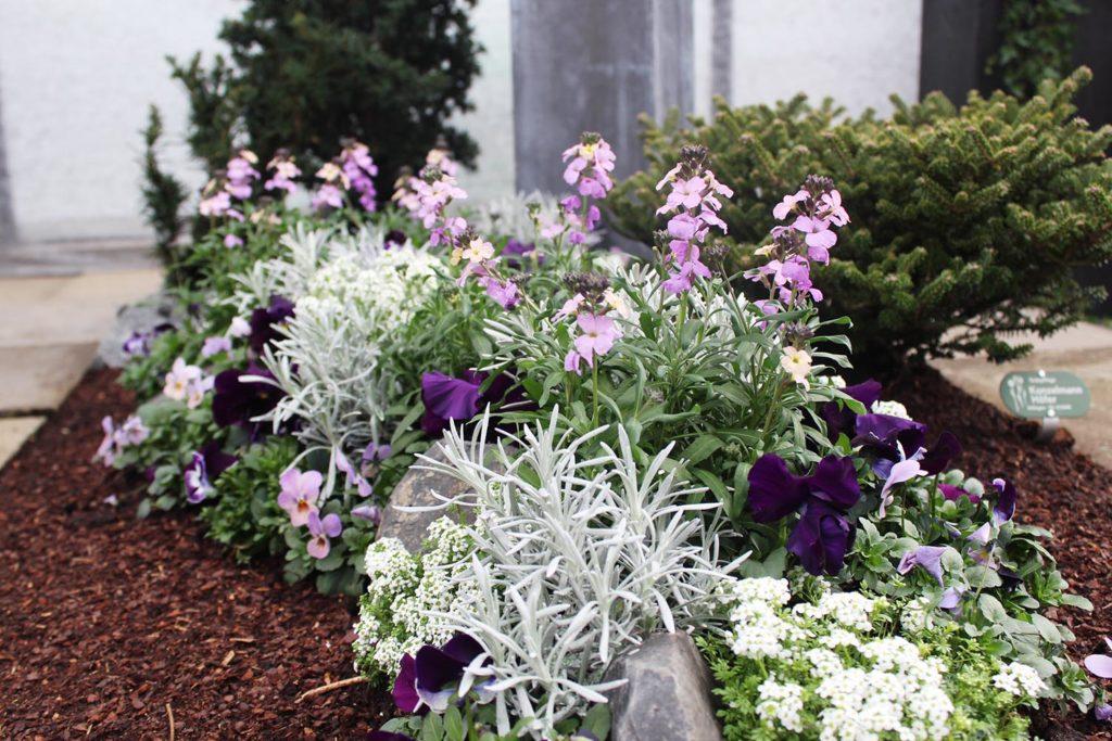 friedhofsblumen pflanzen fr hling sommer herbst winter top 10. Black Bedroom Furniture Sets. Home Design Ideas