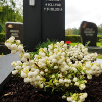 Grabbepflanzung Grabgestaltung im Sommer Herbst Pflanzen Friedhofspflanzen Grabpflanzen Beispiel Idee Foto