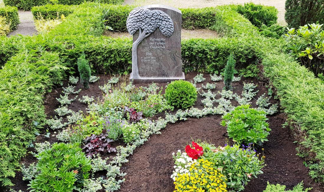 Doppelgrabstein Familiengrabstein Moderne Grabgestaltung Weg Familiengrab Doppelgrab Grabstein Lebensbaum Granit Paradiso Steinmetz Demmin Mecklenburg
