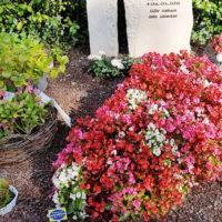 Familiengrabstätte gestalten bepflanzen Grabstein Sandstein Blumen für Grab Sommer Friedhof Melaten Köln Idee Bild Foto Beispiel Vorschlag Anleitung