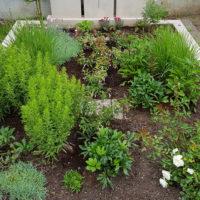 Grabbepflanzung für ein Doppelgrab Familiengrab mit Stauden Rosen Pfingstrosen Einfassung Grabumrandung Doppelgräber