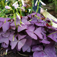 Pflanzen für das Grab im Sommer schöne Grabbepflanzung Grabpflanzen Sommer Herbst rot
