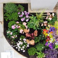 schöne besondere Grabbepflanzung eines Urnengrabes im Sommer Herbst mit Bodendecker blühend Beispiel Idee