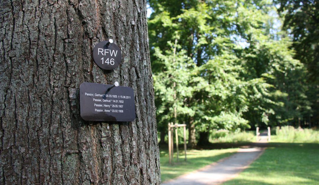 Die Baumbestattung findet üblicherweise auf einem Waldfriedhof statt. | Bildquelle: © stilvolle-grabsteine.de