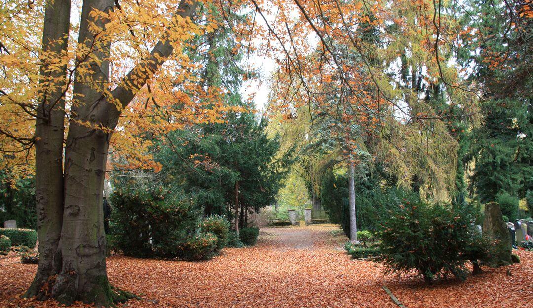 Es gibt spezielle Waldfriedhöfe für Baumbestattungen. | Bildquelle: ©Stilvolle Grabsteine