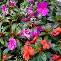 Bepflanzung Grab Blumen