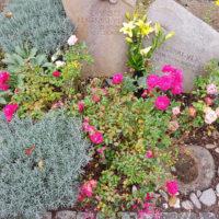 Grabpflanzen Rosen Kräuter