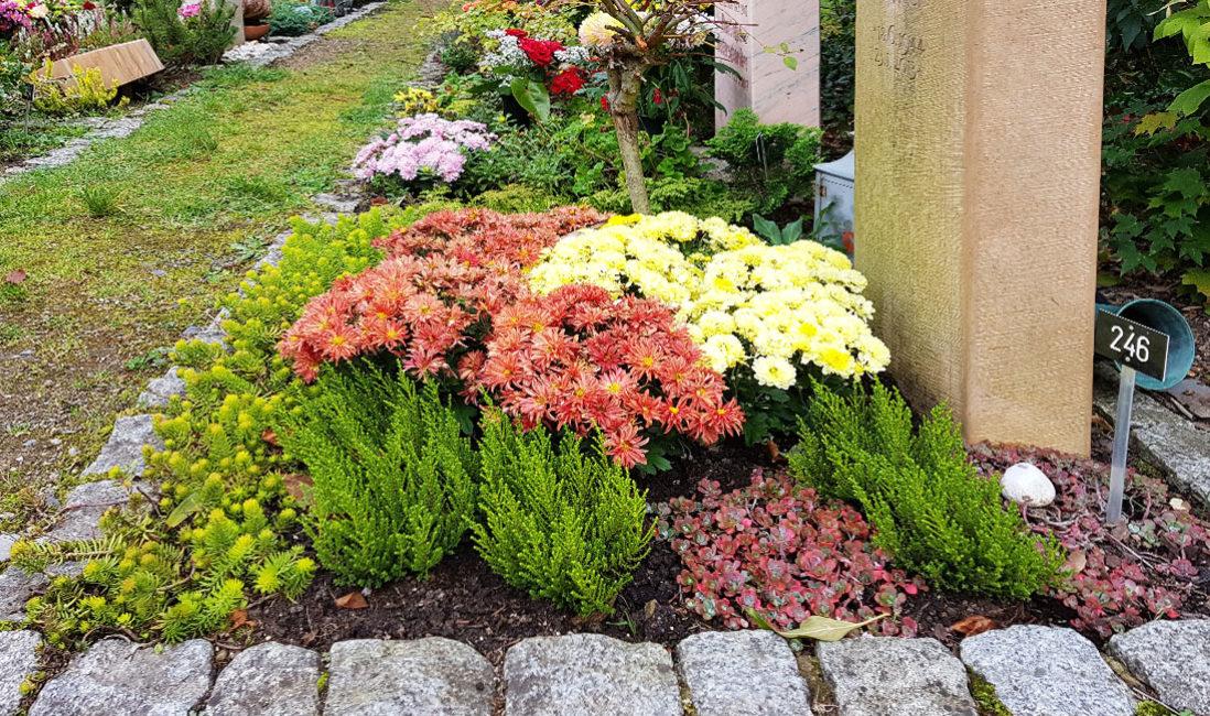 Urnengrabgestaltung Urnengrabepflanzung  Beispiel immergrüne Bodendecker blühend pflegeleicht Sommer Herbst