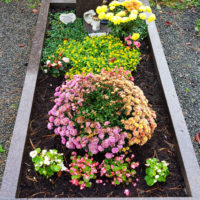 Grabbepflanzung mit spät blühenden Pflanzen im Herbst Grabstein Einfassung