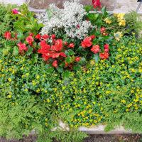 Grabgestaltung mit Bodendeckern im Sommer Herbst Pflanzen Beispiele Ideen Fotos