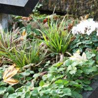 Grabbepflanzung Grab Carl Hummel