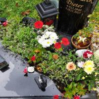 Grabbepflanzung Urnengrab mit Blumen und Bodendeckern im Sommer Grababdeckung mit Platten Friedhof Saalfeld
