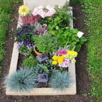 Grabschmuck Grabdeko Einzelgrab Bepflanzung Ziergras Blumen Einfassung Grab