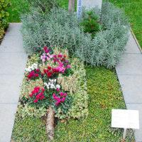 Pflegeleichte immergrüne Grabbepflanzung Einzelgrab winterfest winterhart viel Sonne wenig Wasser Rebhuhnbeere Lavendel