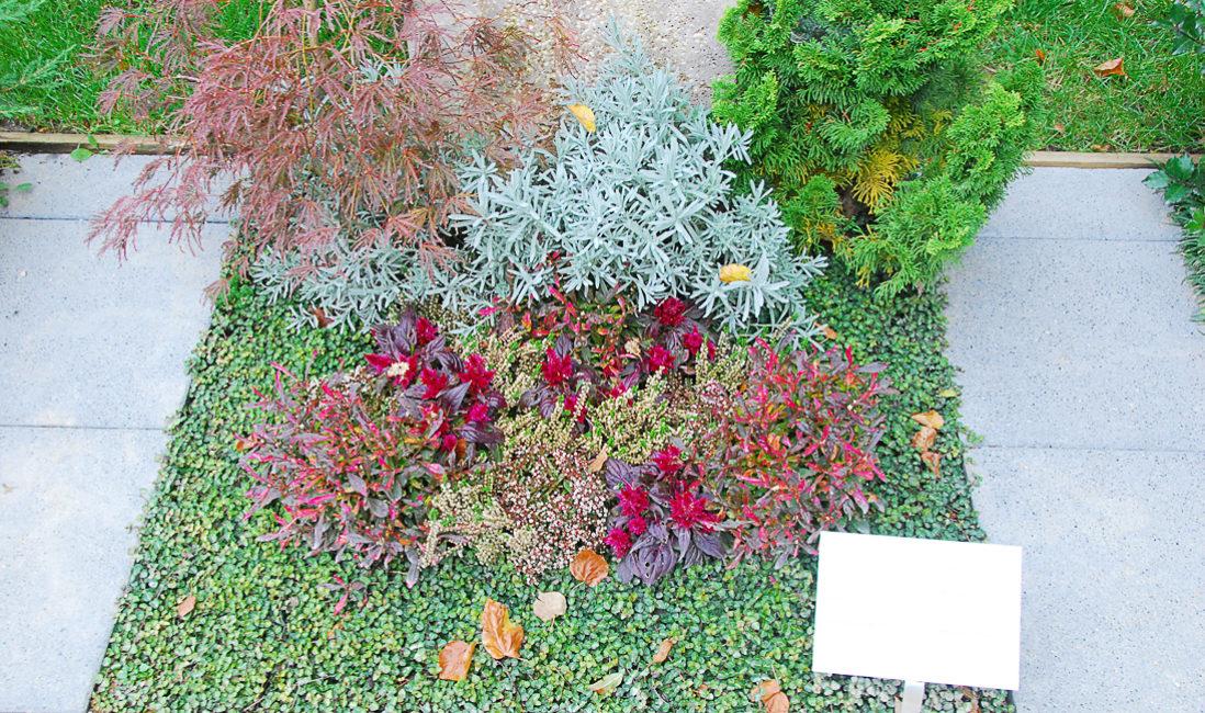 Mustergrab Urnengrab Grabbepflanzung Frühling Sommer Herbst Bodendecker pflegeleicht sonne wenig schatten Büsche ohne Wasser Beispiel Idee Bilder