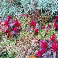 Grabbepflanzung Beispiel Pflanzen Friedhofsblumen Gabpflanzen Idee Beispiel