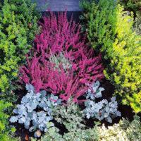 pflegeleichte Friedhofspflanzen Grabbepflanzung Sommer Herbst pflegeleicht sonniger Standort Bodendecker immergrün