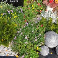 Urnengrab Gestaltung mit Kies und Sommerblumen Deko Pflanzen Blumen