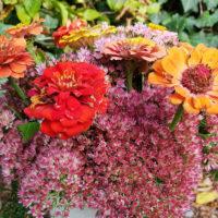 Grab Friedhof Blumen für die Grabgestaltung im Sommer & Herbst Grabpflanzen Friedhofspflanzen Beispiele Ideen