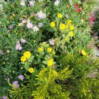 Grabbepflanzung mit Blumen und Bodendeckern