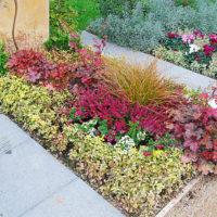 Ideen Beispiele Grabbepflanzung Grabgestaltung Einzelgrab Bilder Sommer Frühling Herbst Bodendecker Stauden bunt Gestaltung Mustergrab Landesgartenschau