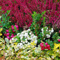 Blumen Stauden Pflanzen für das Grab Grabbepflanzung Beispiele Ideen Fotos winterhart ganzjährig Bodendecker gestalten Mustergrab Gartenschau