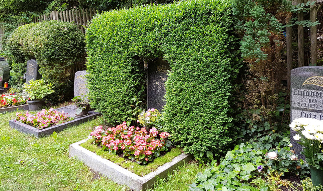 Urnengrabstein Granit Hecke Buchsbaum Einrahmung eingewachsen Blumen Bepflanzung Sommer Bodendecker Grabeinfassung Friedhof Cospeda