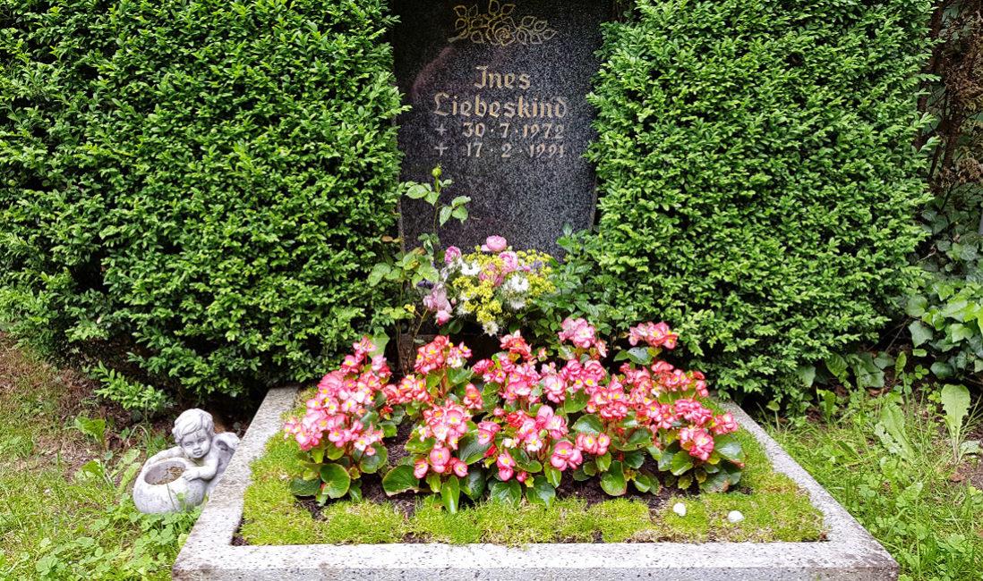 Urnengrab Granit Hecke Buchsbaum Einrahmung eingewachsen Blumen Bepflanzung Sommer Bodendecker Grabeinfassung Friedhof Cospeda