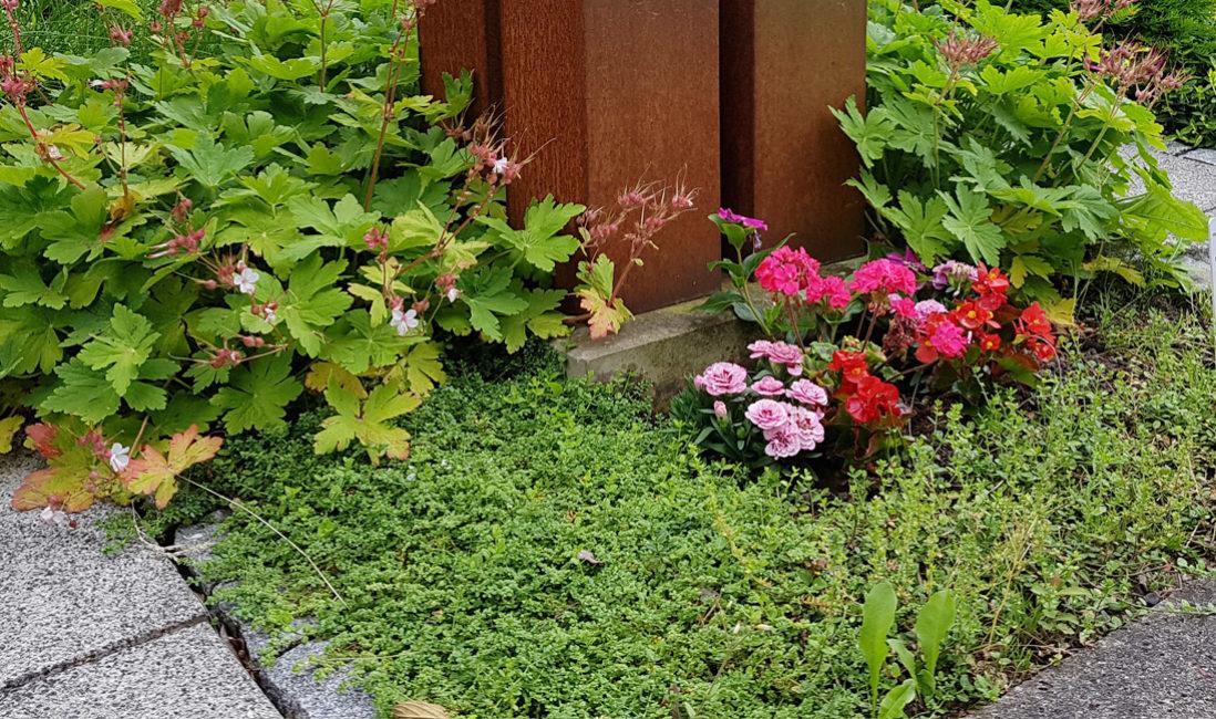 Grabstein Geteilt Kubus Metall Rost Würfel Grabgestaltung Bodendecker Sommerblumen pflegeleicht Hauptfriedhof Erfurt
