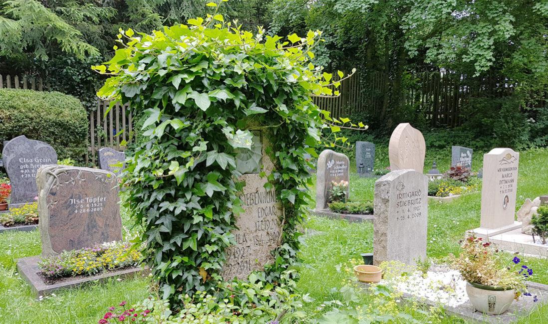 Doppelgrabstein Familiengrab Travertin Efeu Ranken Bewuchs Amonit Pflegeleichte Grabbepflanzung Sommerblumen Immergrün Cospeda Friedhof