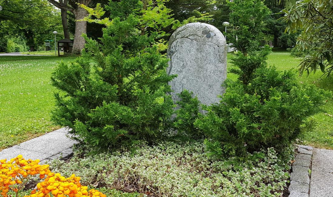 Grabmal Granit Hell Gravur Baum Bodendecker Gehölz Ideen Grabgestaltung Pantoffelblume Sommerbepflanzung Hauptfriedhof Erfurt