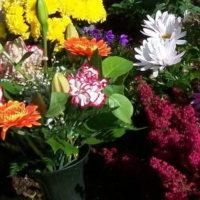 Kindergrab Babygrab Bepflanzung Pflanzen Gestaltung