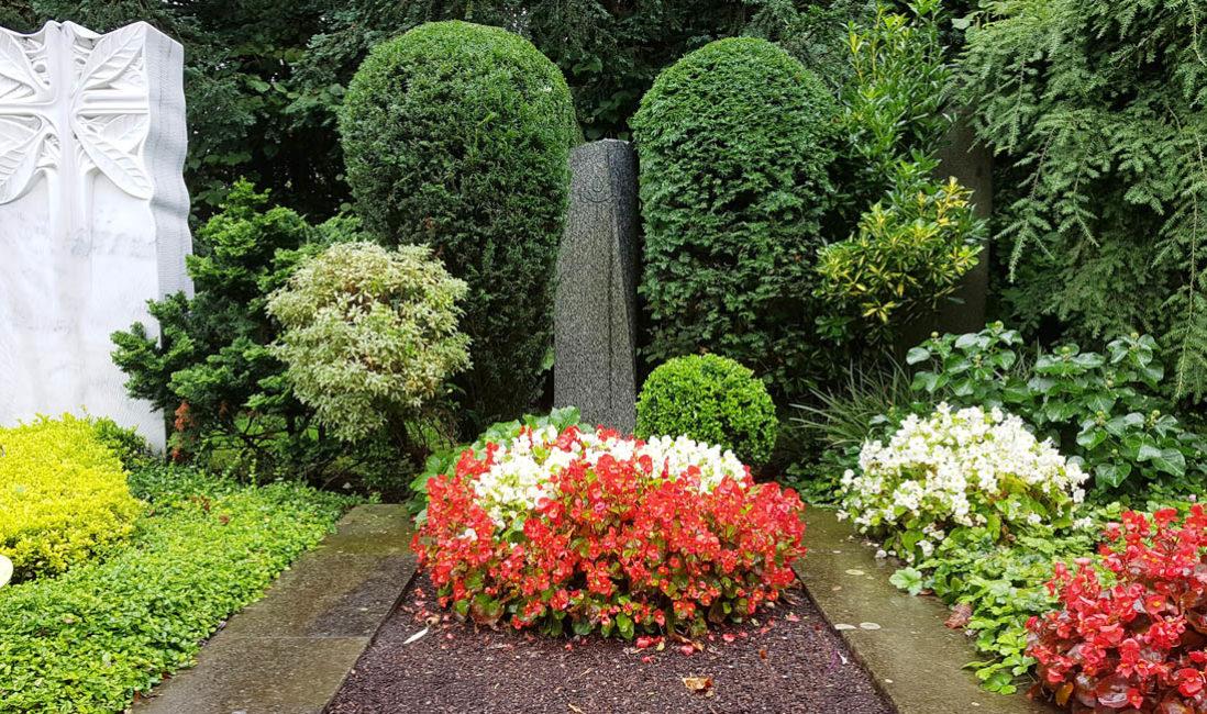 Grabstein Einzelgrabanlage Stele Granit Schwarz Grabbepflanzung Blumen Sommer Friedhofsgärtner Köln Südfriedhof