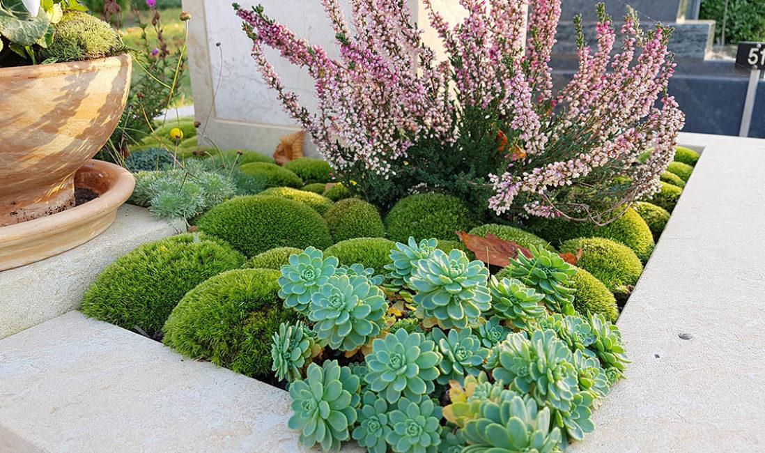 Urnengrabstein Grabgestaltung Bodendecker Moos Heide Grabbepflanzung Herbst Winter Saalfeld