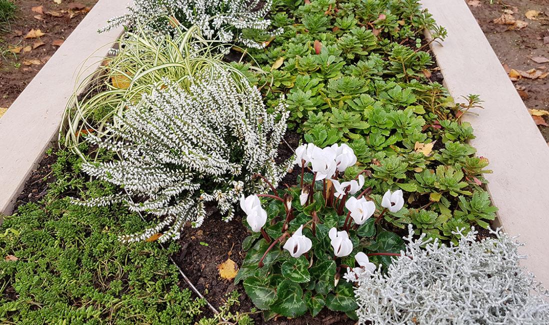 Grabbepflanzung Einzelgrab Grabpflanzen Herbst Winter Grabgestaltung Beispiel Friedhofsgärtner