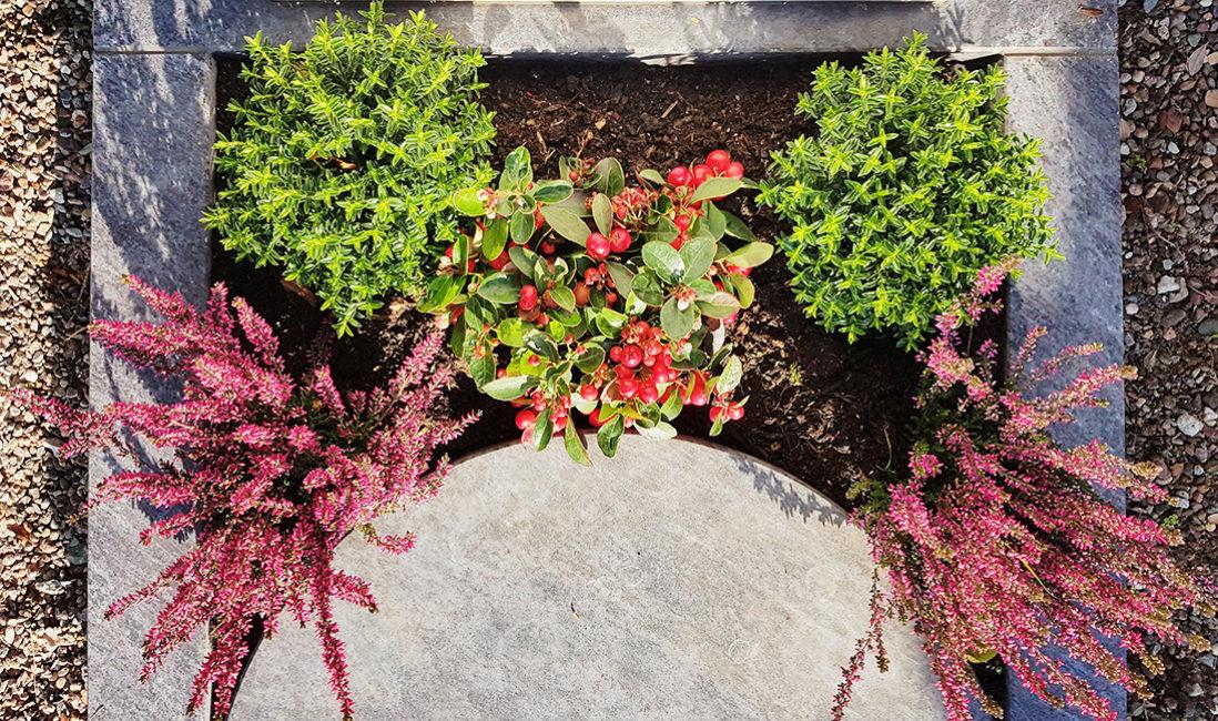 Urnengrabstein Grabgestaltung Bepflanzung Herbst Winter Allerheiligen Heidekraut