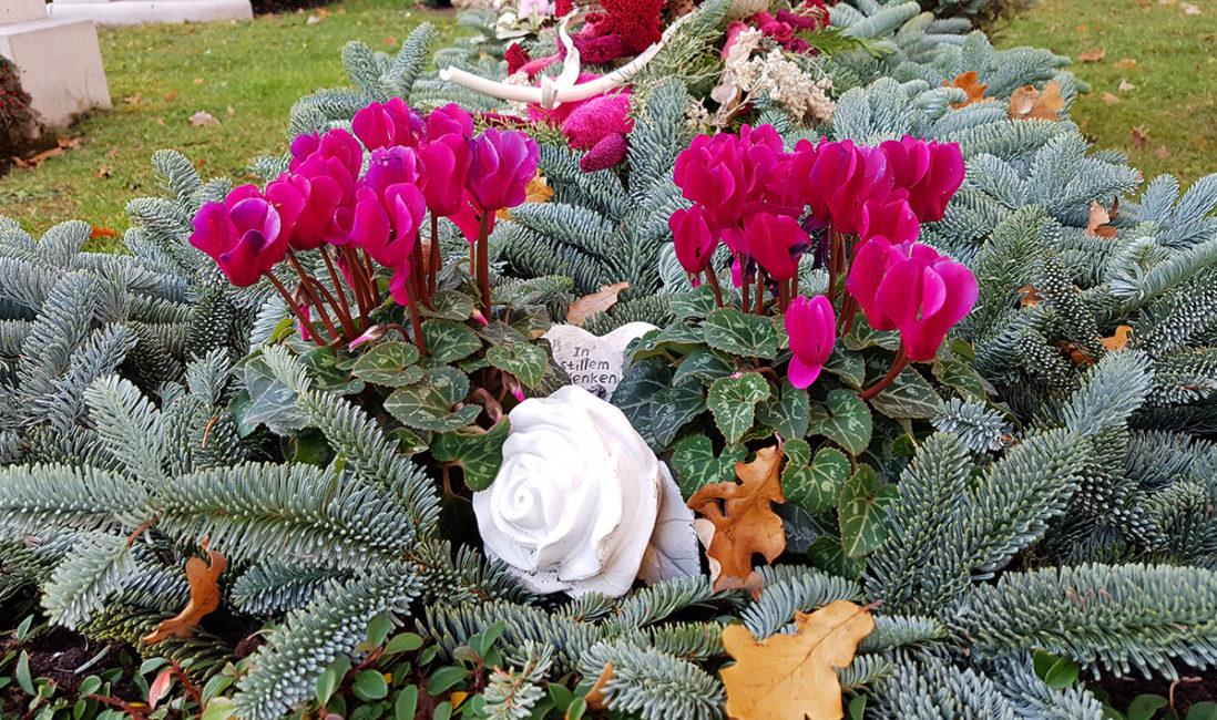 Floraler Grabschmuck Gestaltungsidee Beispiel Bepflanzung Alpenveilchen Reisig Winter Grabstätte Vaterstetten